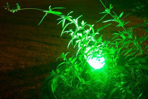 éclairage verte jardin Easy Connect
